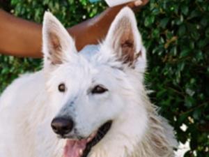WUNDERWEIB Gewinnspiel: Denca Ibiza Hundeshampoos zu gewinnen